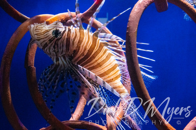 The Ripley's Aquarium of Myrtle Beach is great spot t see
