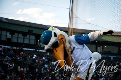 Splash, The Myrtle Beach Pelican, Doing His Thing