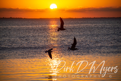 A beautiful sunset at Louie's Backyard in South Padre Island.